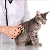 Ветеринарные клиники в Мучкапском